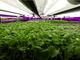 パナソニックがシンガポール初の屋内型植物工場稼働——食料自給率向上に貢献