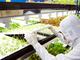 東芝の元フロッピーディスク工場が植物工場へ転身完了——野菜の生産を開始