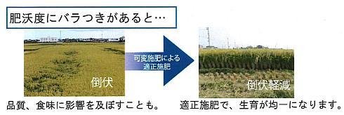 稲の倒伏は適正な施肥によって軽減できる