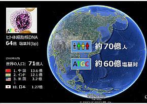 世界の人口とヒト体細胞核DNAの塩基対の比較