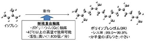 触媒にガドリニウムを採用してポリイソプレンゴムを合成する