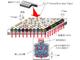 100個の細胞を同時かつ高精度に遺伝子解析する小型チップを開発