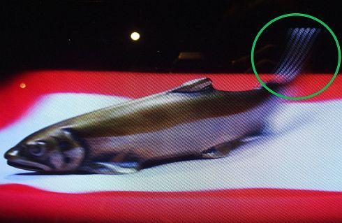 高岡銅器の実写3D映像