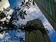 サイバネットがWATERLOO MAPLEのオンライン教育ビジネス事業を譲渡