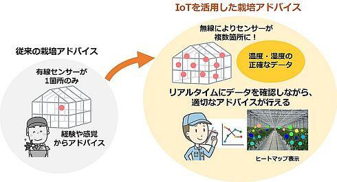 NTTテクノクロスとタキイ種苗による共同実験のイメージ