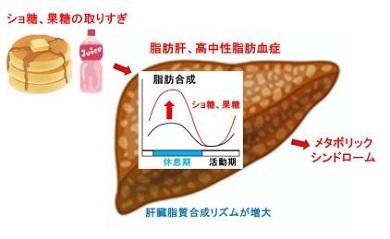 異常 脂質 代謝