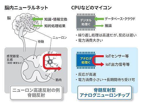 人の脊髄反射と新開発のアナログニューロンチップの比較