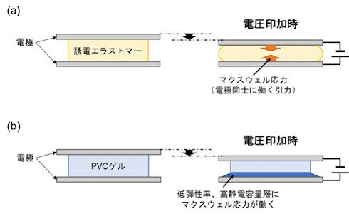 (a)誘電エラストマーの変形概略図と、(b)PVCゲルのクリープ変形挙動