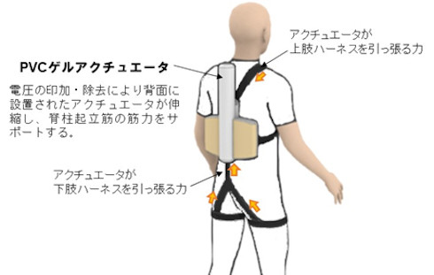 腰サポートウェアの上肢・下肢ハーネスに働く力