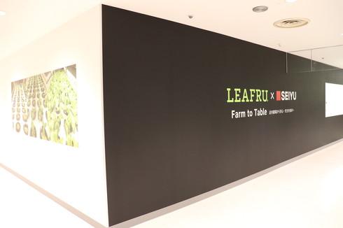 西友上福岡店内の3階に設置された店内植物工場の外観[クリックして拡大]出典:西友