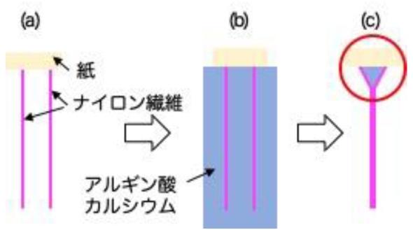 「ハエ型」の接着構造の人工的な製作プロセスの概略図