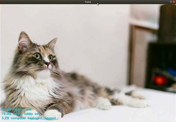 「Model Optimizer」で変換した「SqueezeNet1.1」によるペルシャ猫の分類結果
