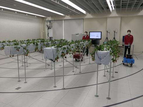 検証ルーム内に設置されたいちごの苗の列と「FARBOT」