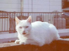 sa_cat02.jpg