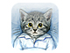 睡眠記録アプリ「ぐっすり〜ニャ」がAndroidに登場——睡眠グラフのシェア機能を追加