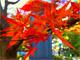 荻窪圭のiPhoneカメラ講座:第34回 紅葉を鮮やかにするiPhoto実践テクニック