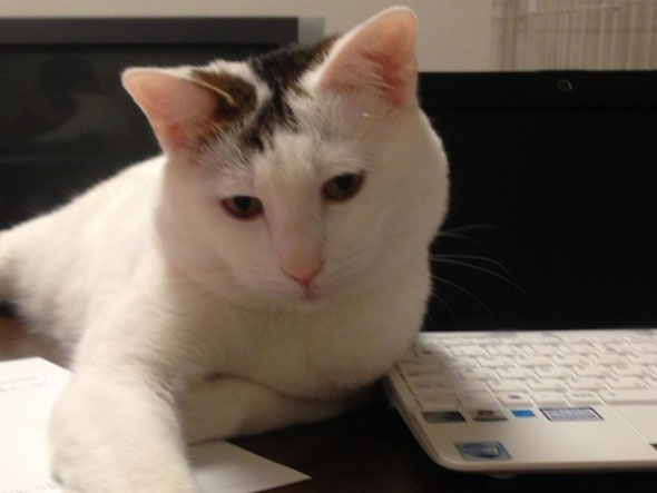 iPhone アプリ TocTocCat