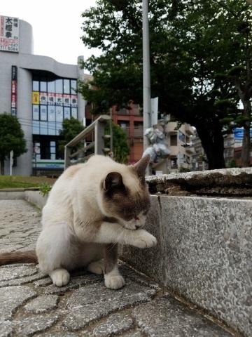 毛繕いする猫を撮影