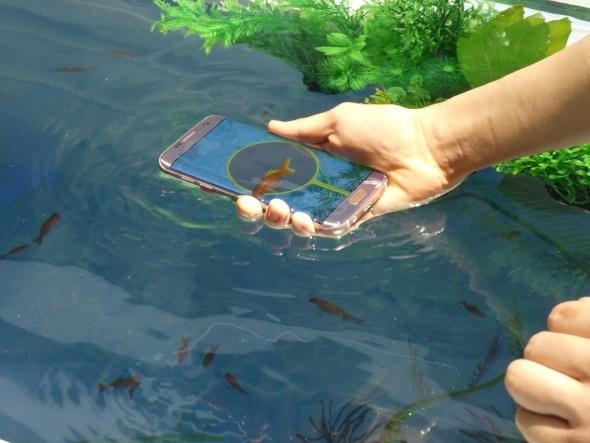デジタル金魚すくい