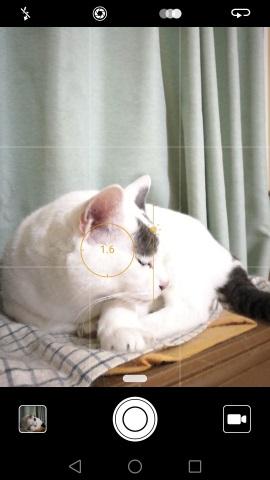 猫の露出を補正