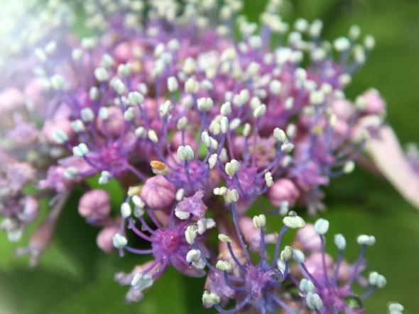 ハルスコープを貼り付けて撮った花(その2)