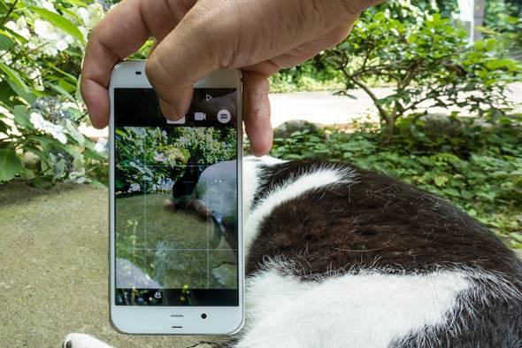 新AQUOSで猫を撮りまくってみた