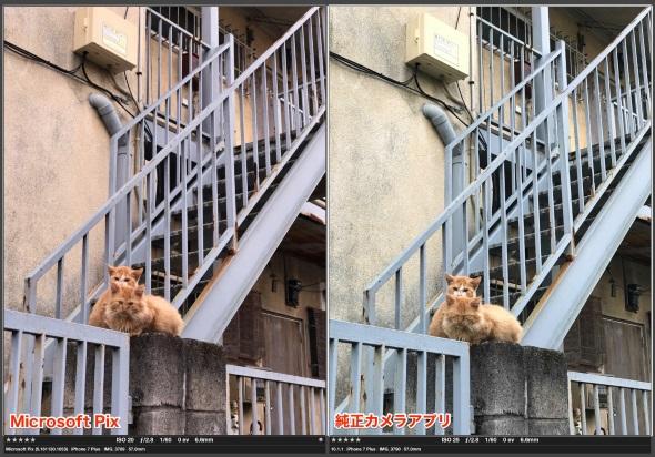 望遠カメラで撮った猫