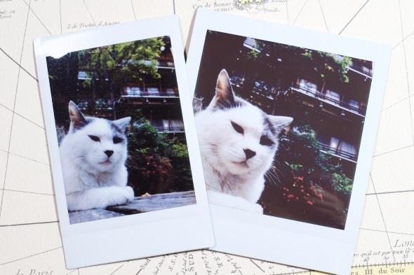 instax mini(左)とinstax SQUARE(右)で同じネコ写真を印刷してみる。instax SQUAREの方が大きくプリントできているのが分かる