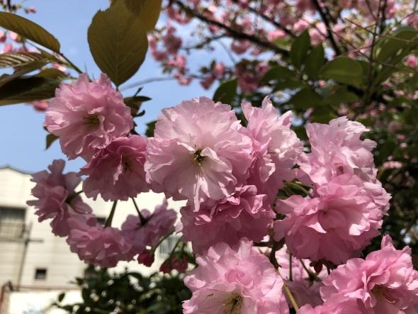 日なたの花