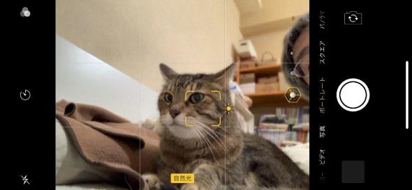 インカメラでネコを狙う