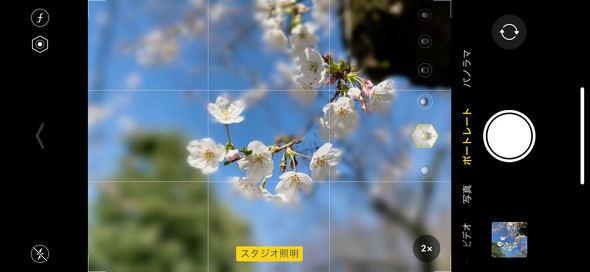 iPhoneで桜を撮る