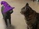 モバイル版Google検索で猫や犬をAR表示する機能のハロウィーン版(たぶん期間限定)