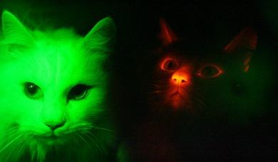 ah_cat1.jpg