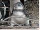 画像認識使ったペンギン観察システム、英大学が開発