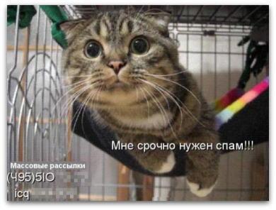 catspam01.jpg