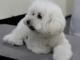 ペット医療向上へ、診療情報をクラウドで共有 富士通と獣医師団体が実証実験