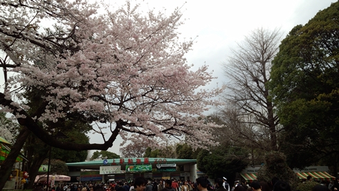 04_ueno3.jpg