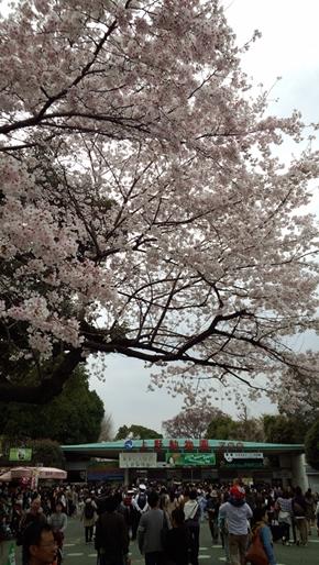 05_ueno4.jpg