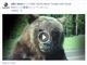 Facebook、音を出したり拡大した動画投稿のランクを上げるアルゴリズム変更