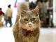 猫の目線で尾道を探索 広島県が「キャットストリートビュー」を公開