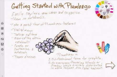 plumbago 2