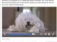 Facebook、長い動画の表示ランクをアップするアルゴリズム変更