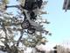 垂直ジャンプもできる車輪付き2本足ロボット「Handle」、Boston Dynamicsが動画公開
