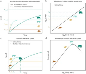 従来の理論と今回論文で示されたモデル