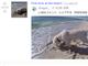 Reddit、動画の直接投稿が可能に(β版)