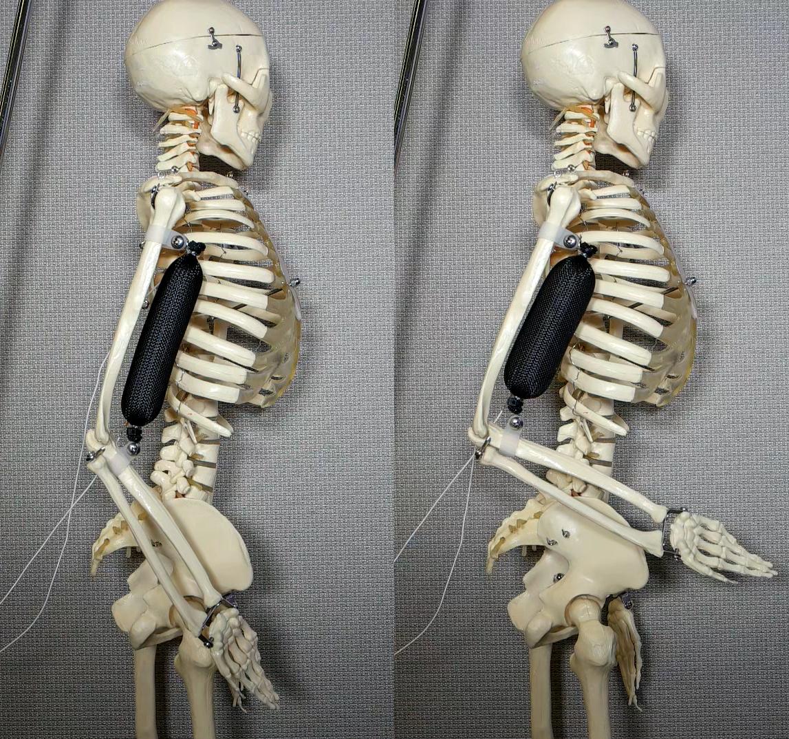 3Dプリンタで作る柔らかい人工筋肉、人間そっくりロボットに一歩前進