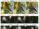 Microsoft、テキストから画像を描く人工知能「AttnGAN」で見事な小鳥の絵