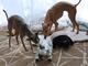 「お尻をクンクン」——本物の犬が「aibo」のおしりを嗅ぐ理由
