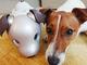 ソニーが犬とアイボの共生実験 「生き物」と認識 「順位付け」も