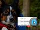 Skypeで会話の録音・録画が可能に クラウドに30日間保存